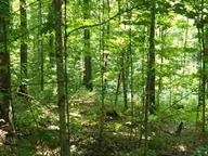 1.2ac Little Bear, Iron River, MI 49935