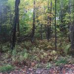 TBD Sleepy Hollow Lot 22, Iron River, MI 49935