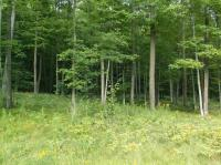 Lot 2 Lower Bluff, Norway, MI 49870