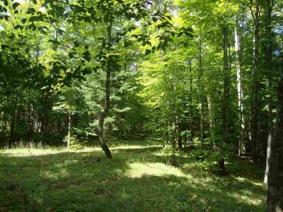 Photo of TBD Off Triple A, Michigamme, MI 49861