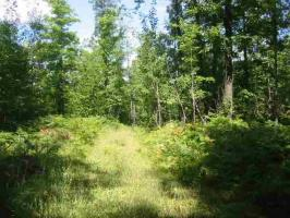 TBD Maple, Fence, WI 54121