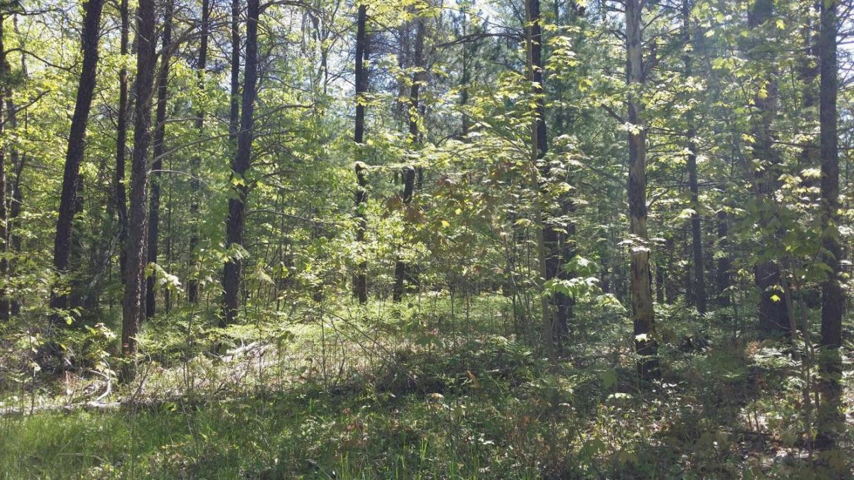 Camp Road, Millersburg, MI 49759