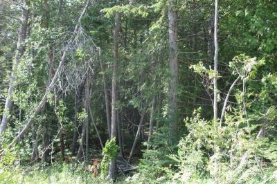 Photo of 6813 Wilderness Park Drive, Mackinaw City, MI 49701