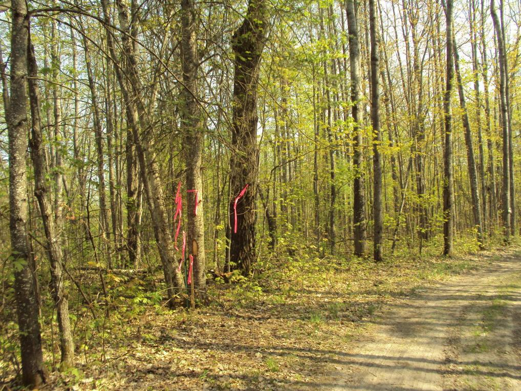 Spikehorn Trail, Indian River, MI 49749