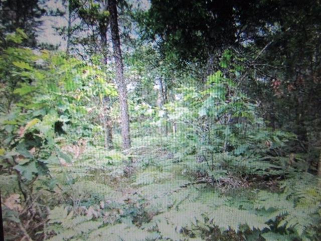 Chippewa & Manitou Trail, Ocqueoc, MI 49759