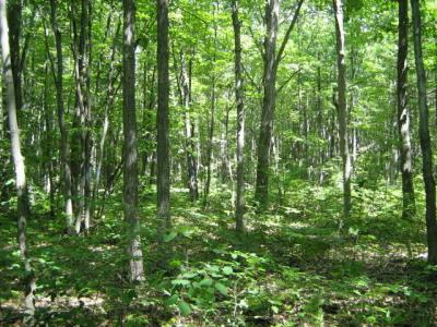 Photo of The Trail Road, Topinabee, MI 49791