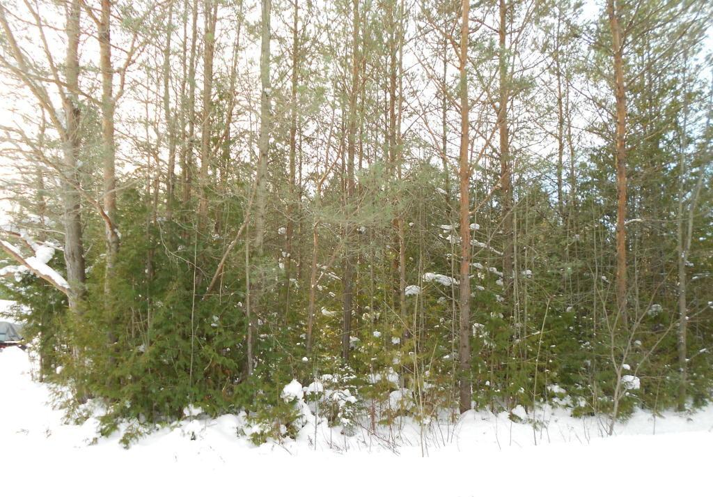 4519 Inland Route Drive, Indian River, MI 49749