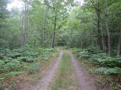 Photo of Spikehorn Trail, Indian River, MI 49749