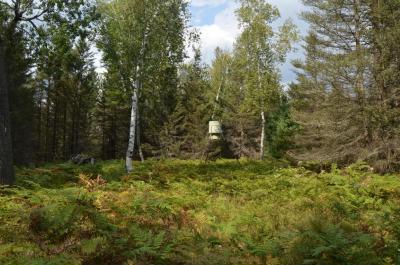 Photo of Fruchey Ranch Road, Curran, MI 48728